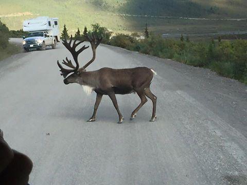 Pedestrian Crossing in Alaska