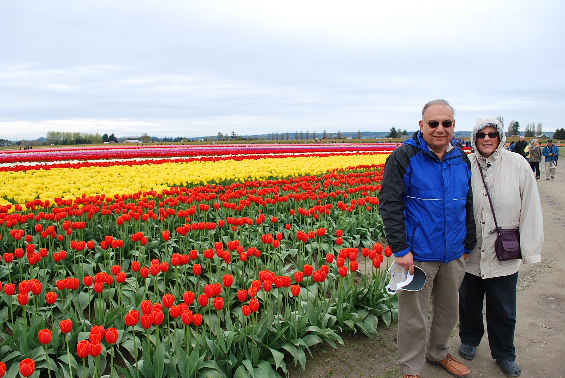 Tulips are Coming to the Skagit Valley