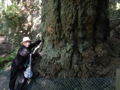 tree hugging in British Columbia Canada