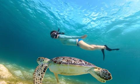 """18th-palm-snorkel-tour-nat-geo-BO58-mosaic.jpg"""