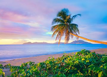 """CC_St_Kitts_Pinneys_Beach_Palm_Tree_TALL_Alamy_RM_478x345_tcm13-144878.jpg"""