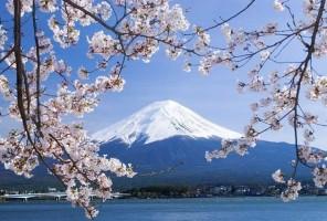 """Shimizu-Mt.-Fuji-shore-excursionssmall.jpg"""