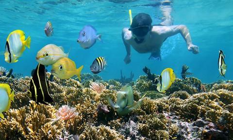 """clear-kayak-beach-snorkel-combo-CZB2-mosaic.jpg"""
